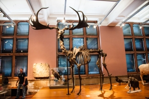 Beastie Bones in Glasgow 2015